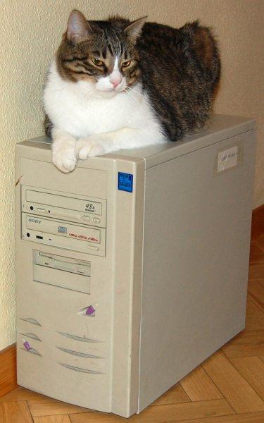 Servidor con gato incorporado