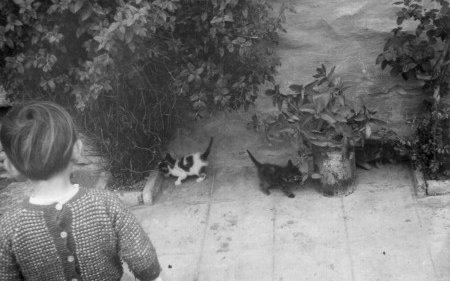 ¡Qué bonitos gatitos!
