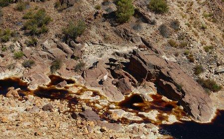 Cabras junto al río Tinto
