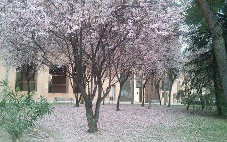 Bonita estampa primaveral
