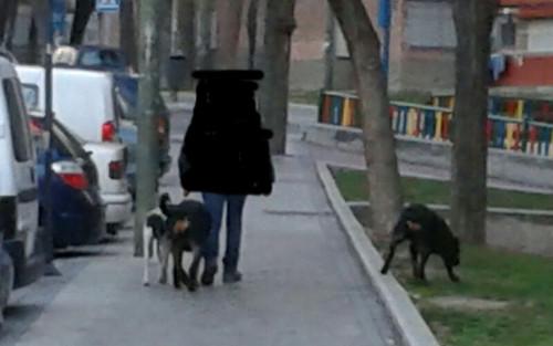 perro-suelto
