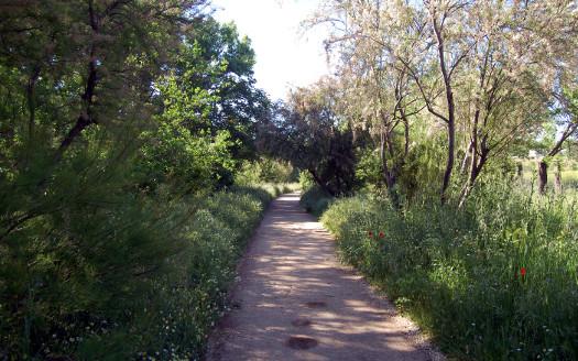 sendero-parque-lineal